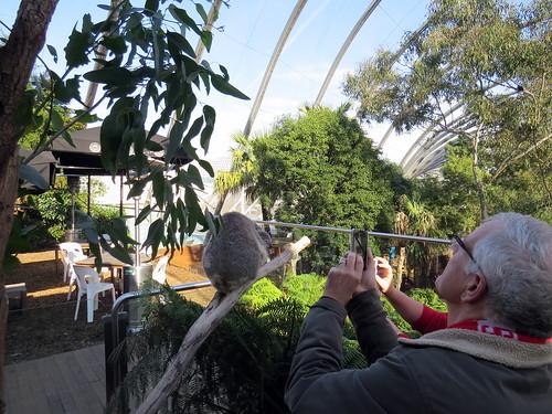 Koalas - Wild Life Sydney Zoo, Sydney, A by David Berkowitz, on Flickr