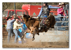Gresford Rodeo_31-08-2013_199-Framed (DoctorJ73) Tags: canon photography eos james cow ride bull dirt valley nsw 7d danny rodeo sundance hunter cowgirl steer dust rider drj cowbow gresford ghorde