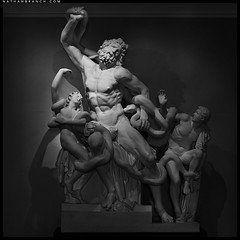 """Replica of """"Death of Laocoon and His Sons"""" (Nathan Branch) Tags: leica newzealand blackandwhite sculpture art auckland artmuseum 90mm mythology aucklandmuseum romansculpture romanmythology aucklandwarmemorialmuseum laocoonandhissons mythologicalart leicam240"""