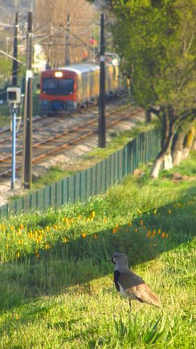 Naturaleza en plena ciudad... (1)