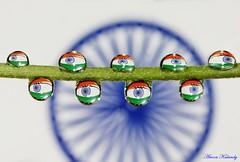 Happy Independence Day (aroon_kalandy) Tags: india macro beauty creativity drops artistic sony kerala refraction tricolor concept tamron calicut kozhikode aroonkalandy