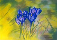 Spring flowers (Dudyshkina Ekaterina) Tags: flowers blue sun flower color art beautiful beauty yellow painting blossom picture crocus painter beautifull pastelle