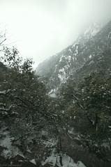 Mt_Huangshan4