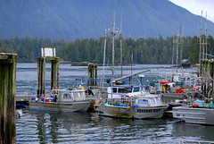 WATERFRONT, BOATS AND A BUSY MARINA IN TOFINO, BC. (vermillion$baby) Tags: ocean city blue red sea marina boat dock vancouverisland wharf tofino pacificnorthwest fishboat buoyant
