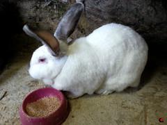 2014 FEB (025) (studioantonellos) Tags: rabbit andros κουνέλι κουνέλια kouneli ανδροσ αλαμανιά κουνελάκι