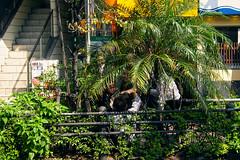 Yakuza Bush (Laser Kola) Tags: green 2004 japan canon eos tokyo weird fight brawl interesting dangerous bush 300d mob fist ikebukuro yakuza situation shrubbery lasseerkola laserkola