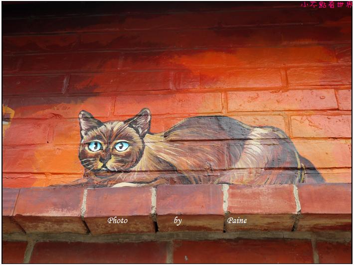 雲林虎尾屋頂上的貓 (27).JPG
