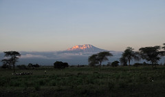 Mount Kilimanjaro at Sunset (Explored)
