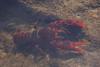 Crustacean (shiggyninty) Tags: park people white black color colour beach nature rock person boat surf natural eagle walk sony royal coastal national alpha 6000 bundeena garie lifesavers hanglider otford