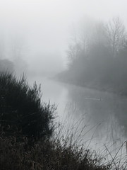 Foggy Day on the River (jchants) Tags: trees water weather fog river duck foggy sammamishrivertrail sammamishriver afoggyday