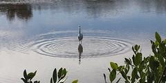 Big Pine Key Fishing Lodge (bpkfishinglodge) Tags: camping fishing boating rv floridakeys bigpinekeyfishinglodge bpkfl