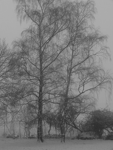 2808 A foggy winter morning