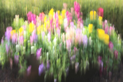 the promise of spring (LotusMoon Photography) Tags: flowers motion nature spring movement blurred impressionist icm intentionalcameramovement theawardtree