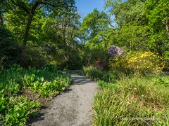 Clyne Gardens 2016 05 13 #16 (Gareth Lovering Photography 2,000,000 views.) Tags: gardens swansea botanical olympus shrubs lovering clyne em1 1240mm clyneinbloom