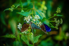 Taiwan-121113-278 (Kelly Cheng) Tags: travel color colour green tourism nature animals horizontal fauna butterfly daylight colorful asia day taiwan vivid nobody nopeople colourful traveldestinations  northeastasia