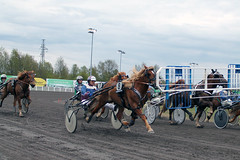 IMG_2720 (lovelymelancholy) Tags: horses horse hevoset hevonen horseraces ravit imrautio ravihevonen oulunravirata