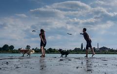 dog swimming (ok2ela) Tags: dog water olympus omd 1250 em5 mzuiko