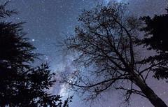 Trees and Stars (AllisonwonderlandNZ) Tags: trees sky silhouette stars nightsky milkyway starlight astrometrydotnet:status=failed astrometrydotnet:id=nova1587337