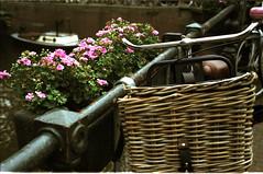 smell of amsterdam 13 (antlinjian) Tags: film amsterdam canon fuji ae1 18 50 jordaan c200