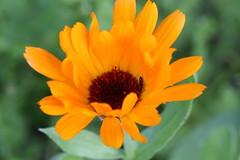 Flower (a.klimczyk) Tags: flowers sun sunshine canon july poland polska sunny kwiaty wiosna kwiat maopolska chrzanw canon5dmarkiii lens100macro ef100mmf28lmacroisusm annapawlikowska aklimczykyahoopl