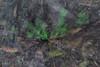 Shamrock Move (José Ramón de Lothlórien) Tags: naturaleza verde nature shamrock chapultepec trebol treboles mèxico ciudaddemèxico shamrockhunt