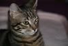 sempre-io (Lina Prema Polmonari) Tags: gatto nero micio tigrato
