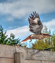 Envole toi ! (Rmi_M.) Tags: sky bird wow ciel oiseau aile