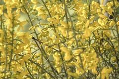 1304162539 (jolucasmar) Tags: viaje primavera andaluca paisaje contraste ros mirador curso puestasdesol cazorla montaas cuevas bosques composicion panormica viajefotof