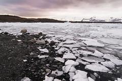 Jkulsrln - Glacier Lagoon (Claire Willans) Tags: winter sea cold ice nature water iceland lagoon glacier jokulsarlon glacial jokulsarlonglacierlagoon jokulsarlonglacier