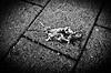 (formwandlah) Tags: life city light urban bw white abstract black strange animal architecture contrast dark dead death sadness blackwhite high pain rat solitude noir loneliness sad darkness pentax outdoor fear dramatic surreal architektur sw gr monochrom asphalt ratte sorrow sureal tod vignette tote ricoh paranoia gebäude einsamkeit babylon kaiserslautern abstrakt thorsten prinz melancholic schärfentiefe finster schmerz trauer bizarr skurril düster einfarbig finsternis minimalismus melancholisch formwandlah