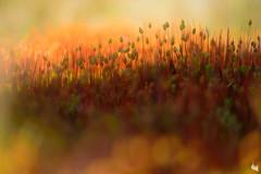 little world (Sandra Bartocha) Tags: light red summer moss warmth sandrabartocha