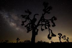 The Milky Way at Joshua Tree (bjsmith1984) Tags: california nature landscape nationalpark space joshuatree astrophotography nightsky milkyway joshuatreenationalpark