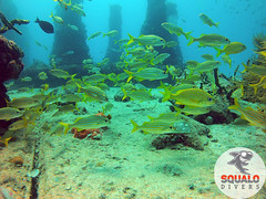 Scuba Diving-Miami, FL-Jun 2016-21 (Squalo Divers) Tags: usa divers florida miami scuba diving padi ssi squalo divessi