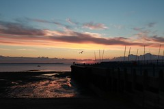 West Quay sunset, with bird (NovemberAlex) Tags: colour light sunset kent silhouette water whitstable