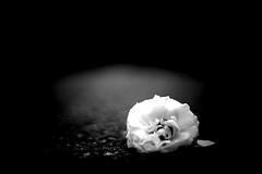 Street flower - a lonely flower on the street captured by A7ii and Zuiko 50/1.4 (Daniel Staaf Photography) Tags: street flowers blackandwhite bw flower art monochrome lens 50mm prime blackwhite bokeh sony olympus streetphoto fe zuiko 5014 a7ii
