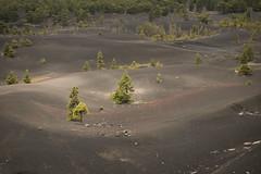 Volcanic landscape (A.González) Tags: palma island isla pino pine volcánico volcanico volcán volcan volcano paisaje landscape arena sand angelgonzalez agiz3 fuji fujifilm xe1