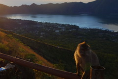 DSC02475 (Peripatete) Tags: bali mountains nature sunrise landscape volcano mount monkeys batur