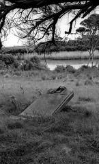 Alberton Cemetery, B+W 1970s- sheet 165 05 (Graeme Butler) Tags: landscape heritage graves cemeteries victoria australia