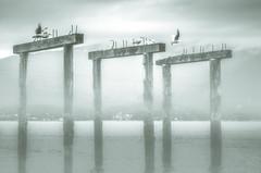 A Drab Day by the Bay (PrairieBug) Tags: supertakumar55mmf18 sea water fog jetty oldjetty birds seagulls barnet marine park
