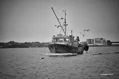 Back from the sea (Fiktivejens) Tags: sea bw seagulls white black bird water birds boat fishing seagull may nkon d90 2013 18105mm