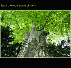 2013 05 18 From the Roots Point of View (Mister-Mastro) Tags: tree green up angel wide grn root arbre baum wurzel stamm weitwinkel schnitzerei vigilantphotographersunite
