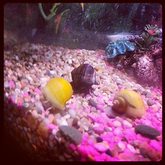 Snails love algae wafers (leelee1378) Tags: square squareformat hudson iphoneography instagramapp uploaded:by=instagram