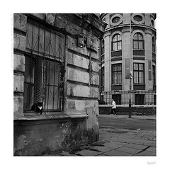 Lazy sunday (bolas) Tags: street old city urban woman abandoned cat europe industrial kodak trix poland va 400 plus agfa lodz d xenar rolleicord duoscan ultrafin postindusttrial
