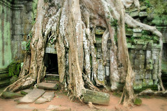 Nature is taking back what was.. (Consulente per Viaggiare) Tags: travel cambodia angkorwat adventure angkor wat cambogia