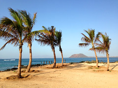 Isla De Lobos (Marc Sayce) Tags: trees sea de island islands sand day fuerteventura canarias palm clear canary lobos isla islas corralejo
