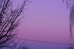 (ValeriaTrandina) Tags: trees winter purple