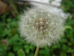 Macro in action (@luizjrgarcia) Tags: life flower macro sony vida passion paixo w35 a37 luizgarcia alpha37 slta37