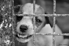 Adopt, Don't Shop - Explored! (@mons.always) Tags: bw dog animal animals puppy canine pup shelter adopt