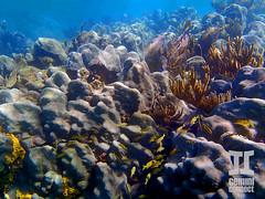 Placencia, Stann Creek, Belize (spratt504) Tags: ocean sea fish underwater belize snorkeling reef greatbarrierreef placencia coralreef oceanography underwaterphotography travelphotography oceanphotography belizebarrierreef stanncreek silkcayes fishphotography belizesnorkeling belizephotography silkcayessnorkeling