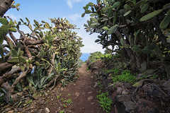 Grand tour de Faro de Anaga, Tenerife (i_goupil) Tags: cactus green water landscape spain eau camino hiking earth path rando paisaje canarias vert tenerife terre paysage espagne chemin plantes canaryisland ocan lescanaries